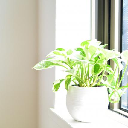 高断熱住宅で重要な窓えらびのポイント