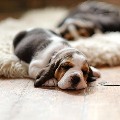 ペットと快適に暮らす家づくり